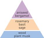 pyramid scheme bergamot