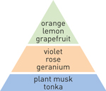 pyramid scheme grapefruit